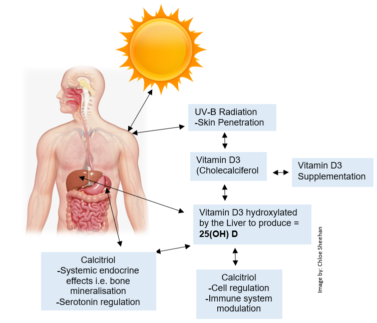 The Low Down On Vitamin D Aka Vitamin Defend West Street Wellbeing